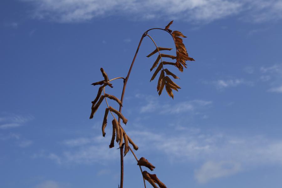 Mustarinda